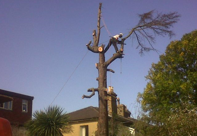 tree-pruning-Knutsford