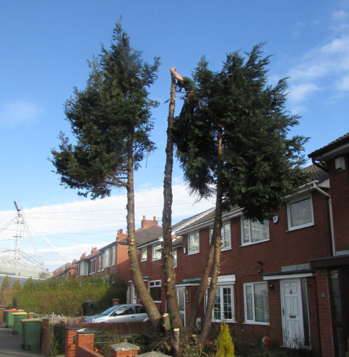 tree-felling-Knutsford