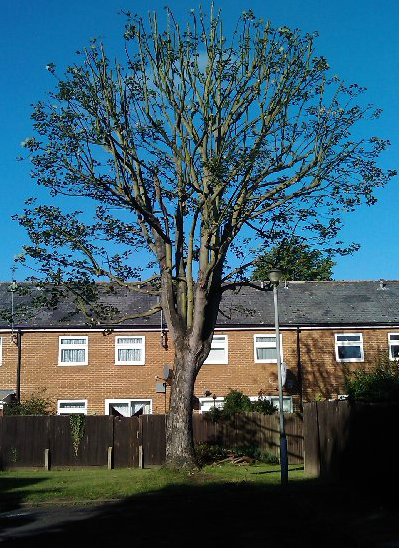tree-removal-Knutsford