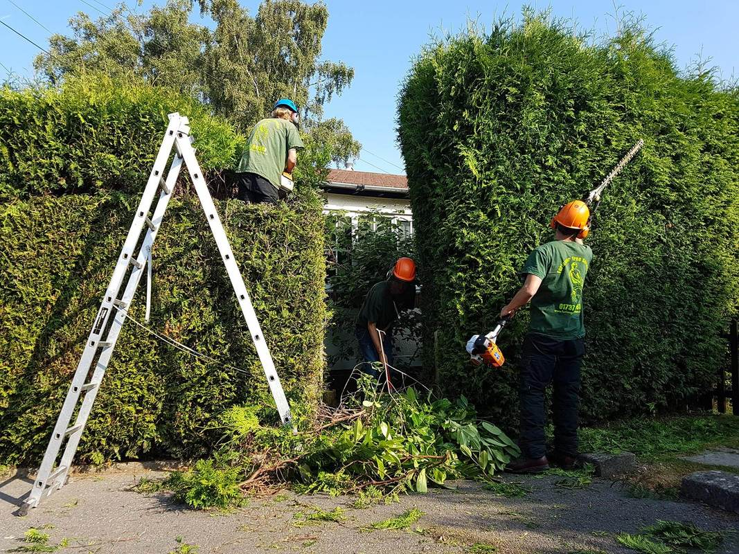 hedge-trimming-Cheshire
