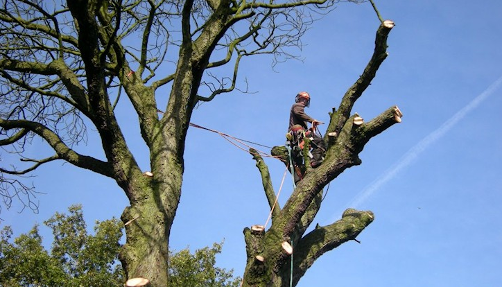 tree-surgeon-Knutsford