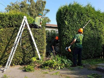 hedge-trimming-Congleton