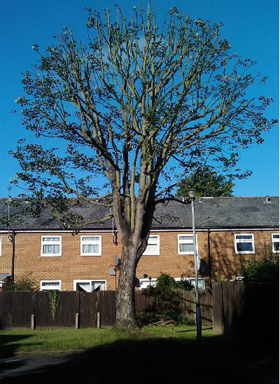 tree-removal-Congleton